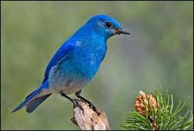 Comment dit-on oiseau en anglais ?