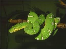 Comment dit-on serpent en anglais ?