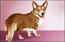 Comment s'appelle le chien de la directrice ?