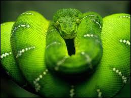 De quelle couleur est ce serpent ?