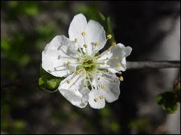 Quel fruit cette fleur donnera-t-elle ?