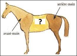 Comment s'appelle la partie entre l'avant main et l'arrière main (en jaune sur le schéma) ?