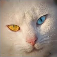 Comment s'appelle cette particularité oculaire ?