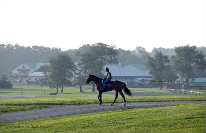 L'amble est spontané chez certaines races de chevaux !