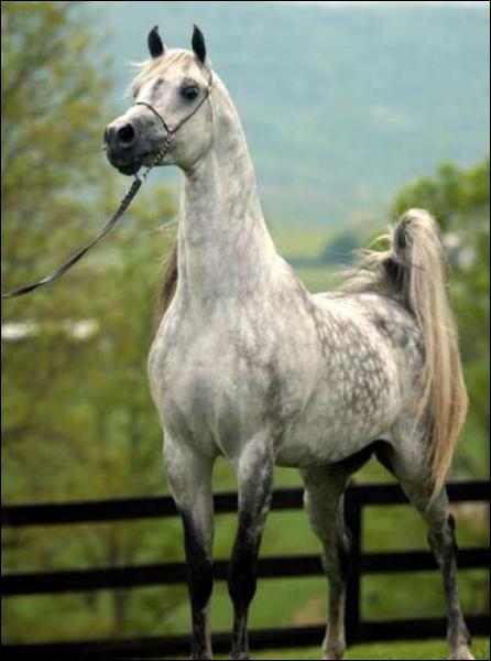 A quel endroit ont démarré les courses de chevaux montés, devant public ?