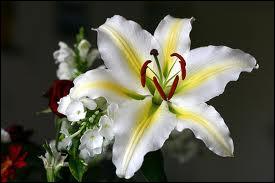 Quel est le nom de la fleur que s'échangent Louise et Saito ?