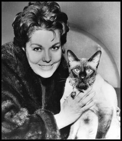 Voici une photographie de plateau (ni le chat ni l'actrice ne jouent donc ! ) du film  L'adorable voisine . Qui est la star ?