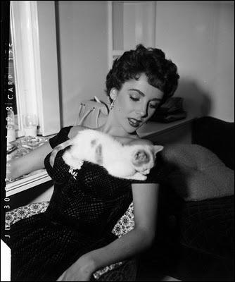 Une très jolie photo avec un chaton confondant de naturel qui s'en suit son petit bonhomme de chemin. Qui est la star ?