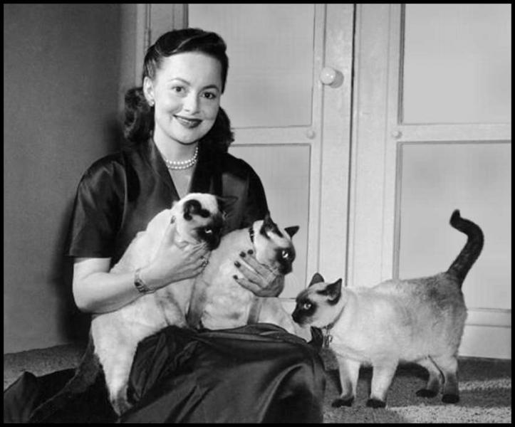 Il semble bien que cette actrice star des années 40 et 50 pose avec ses trois superbes siamois. Qui est-elle ?