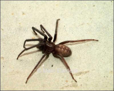 On est arachnophobe quand on a peur des :
