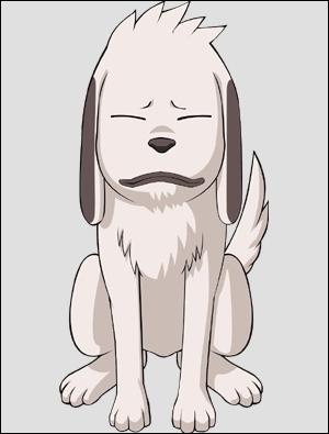 Comment se nomme le chien de Kiba ?