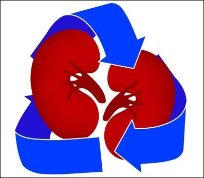 Quel géant d'Internet a lancé une nouvelle application qui permet à ses utilisateurs d'ajouter le statut  donneur d'organes  à leur profil ?