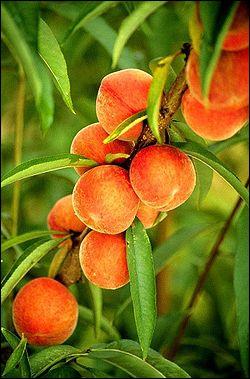 Quel accessoire vous sera-t-il utile pour pratiquer l'activité dont le nom est le même que celui de ce fruit, qui est parfois  de vigne  ?