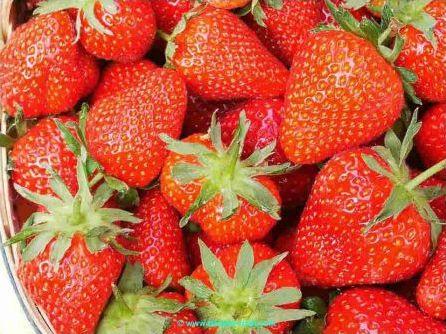 Les fruits et leurs homonymes
