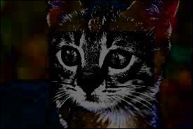 Ma nièce , elle, elle a osé devenir la compagne de ce chat domestique ! Franchement, vous auriez fait la même chose ? Qui suis-je ?