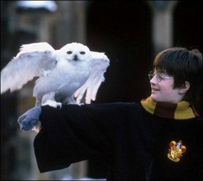Comment s'appelle la chouette blanche de Harry ? (HP1)