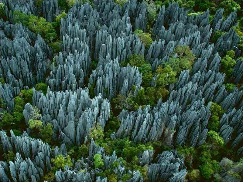 Un paysage si  piquant  semble bien inhospitalier, pourtant il regorge de créatures endémiques et il se trouve :