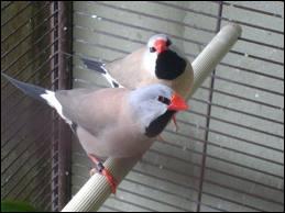 Maintenant, quel est cet oiseau ?