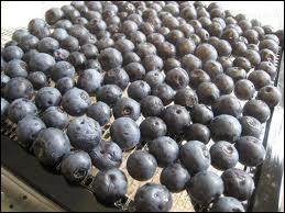 Une part de tarte faite avec ce fruit condamne votre sourire à un rictus proche de celui de Jaquouille la fripouille...