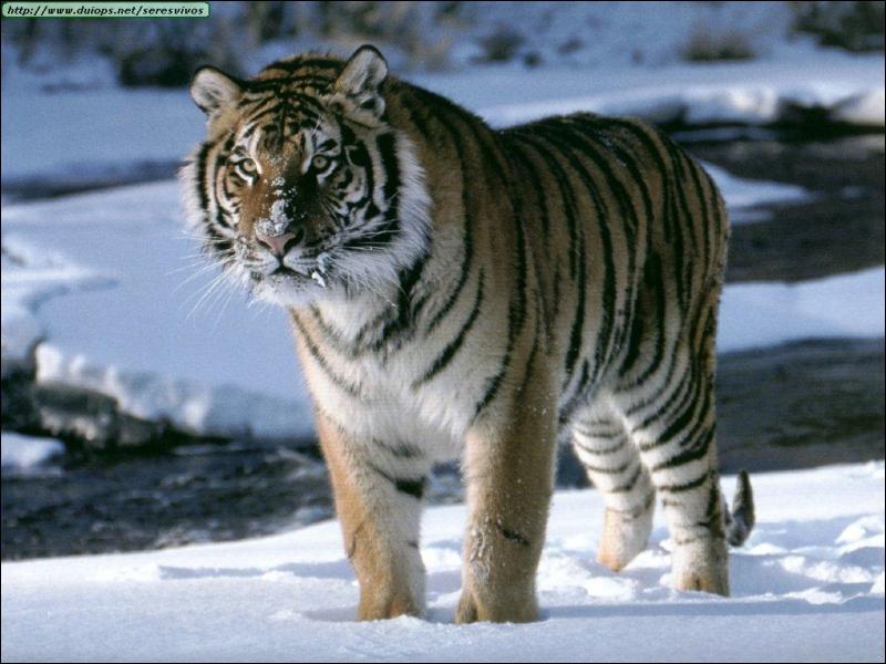 Quizz f lins du monde quiz felins monde mammiferes - Quel est le nom le plus porte au monde ...