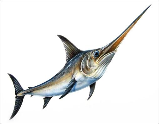 Quelques lettres prises dans le nom de ce poisson, qui peut peser jusqu'à 500 kg, permettent d'écrire le nom...