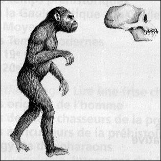 Racines grecques et latines : Que signifie la racine « -pithèque », que l'on retrouve par exemple dans « australopithèque » ?