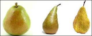 Quelle est la variété de poire la plus cultivée au monde ?