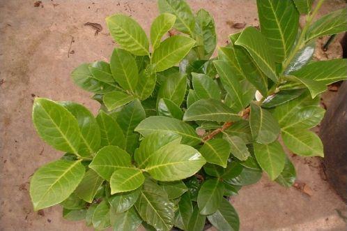 Plantes courantes de nos jardins !