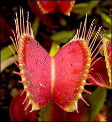 Environ combien d'espèces de plantes carnivores sont connues à ce jour (2012) ? Choisissez l'affirmation la plus précise.