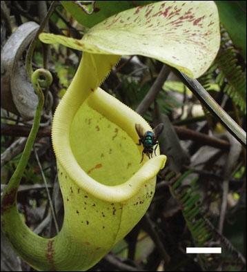 Les pièges des plantes carnivores se caractérisent par leur mobilité ainsi que par leur rapidité ou leur lenteur. Quelle est la principale différence entre les pièges actifs et les pièges passifs ?