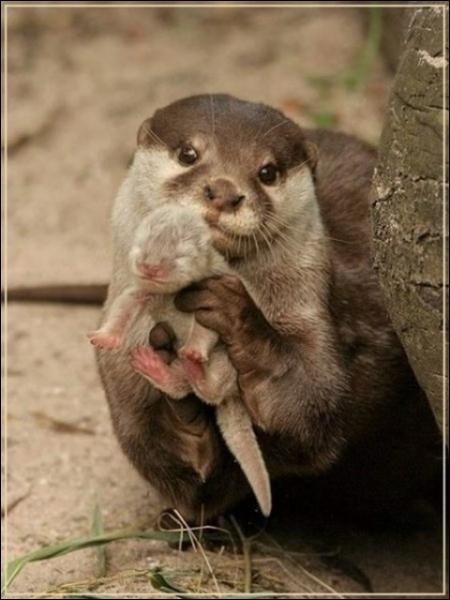 Comme tous les mammifères, elle est une mère dévouée !