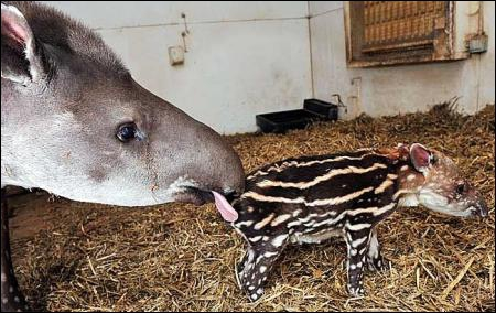 On trouve cet animal en Amérique latine et en Asie !