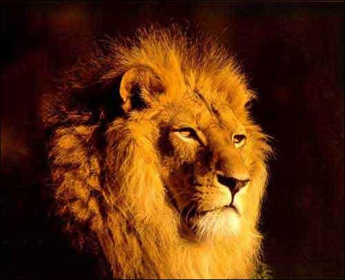 On m'appelle  le roi de la jungle , qui suis-je ?