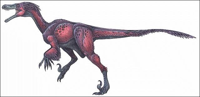 Quel cousin du Velociraptor s'est attribué, par erreur, le nom de celui-ci dans  Jurassic Park  ?