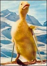 Ce canard de fiction, héros d'une série télévisée des années 60, s'appelait...