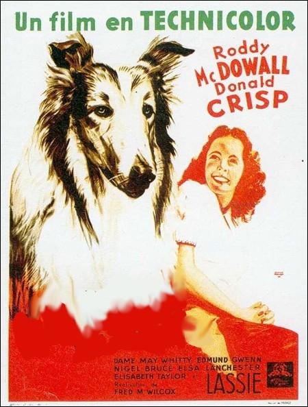 Une famille de fermiers est obligée de vendre leur brave chienne... . film américain réalisé par Fred M. Wilcox de 1943, un des premiers rôles d' Elizabeth Taylor