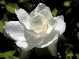 Cochez la suite : Fleur ...