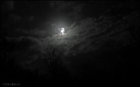 La suite de : Nuit ...