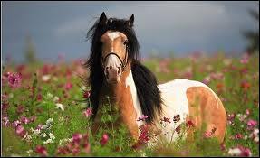 La robe de ce cheval est-elle pie gris ?