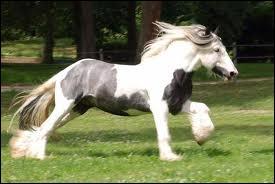 Ce cheval est-il  overo  ?
