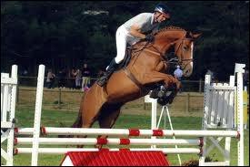 Quelle est cette célèbre race de cheval ?