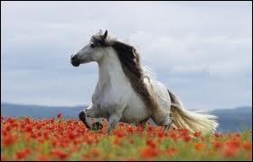 Ce cheval est-il un lusitanien, sachant qu'il vient d'Espagne et qu'il fait entre 1m53 et 1m63 ?