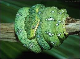 Comment dit-on serpent en italien ?