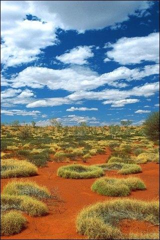 Le  bush , que vénèrent aujourd'hui les australiens, est la steppe de l'arrière-pays. Eucalyptus nains, acacias, bosquets, cotoient des herbes, dont la spinifex, qui a pour particularité... ?