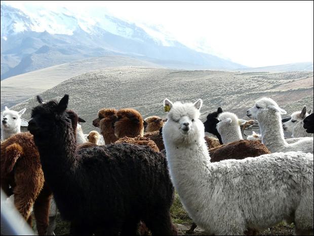 Située dans la province de Pichincha, à 2850 mètres d'altitude, je suis la capitale de ce pays !