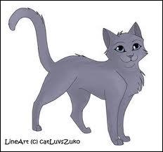 Qui est ce chat ? (Clan de la Rivière)