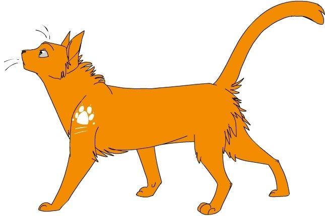 Guerre des clans (Cycle 1) Qui est ce chat ?