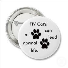 Que signifie le sigle : FIV ?