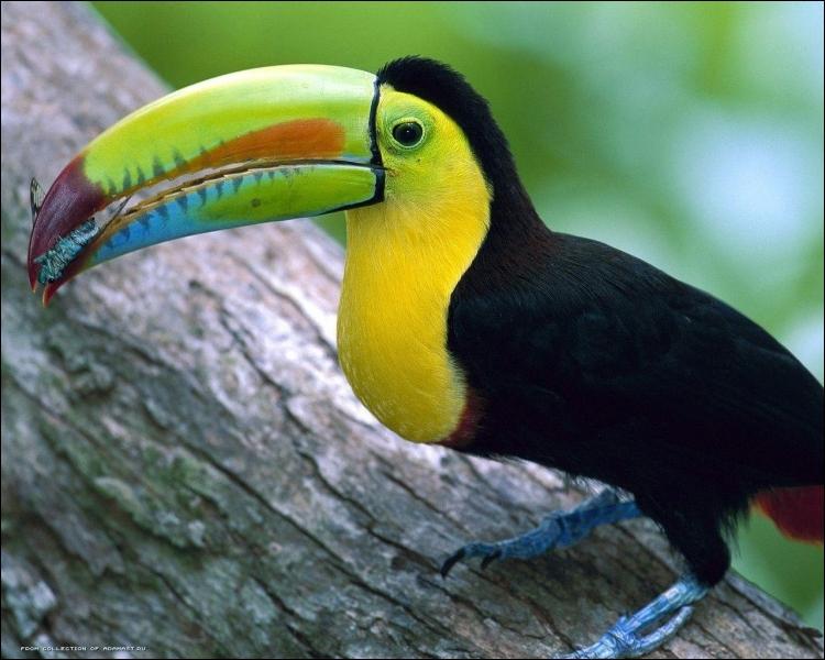 Quel est le seul oiseau pouvant voler en arrière ?