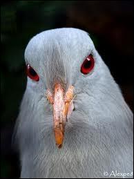 Quel oiseau n'existe plus ?